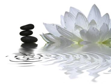 lotus balance