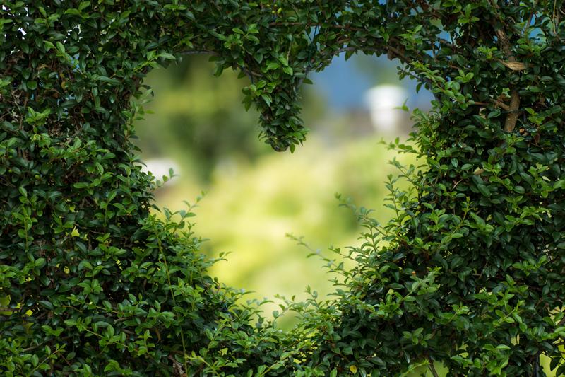 levin-blog-heart-green
